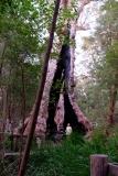 Západní Austrálie - Western Australia-100