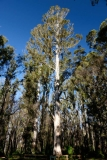Západní Austrálie - Western Australia-105