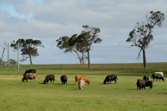 Západní Austrálie - Western Australia-118