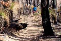 Západní Austrálie - Western Australia-2