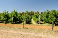 Západní Austrálie - Western Australia-33
