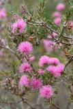 Západní Austrálie - Western Australia-47