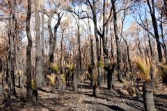 Západní Austrálie - Western Australia-5
