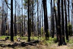 Západní Austrálie - Western Australia-53