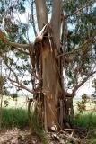 Západní Austrálie - Western Australia-63