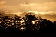 Západní Austrálie - Western Australia-66
