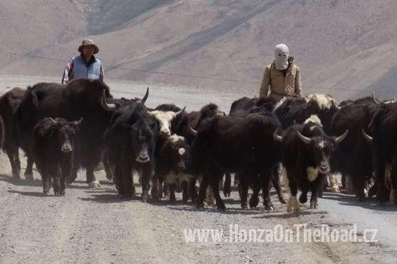 Tádžikistán, Jaci nesmí v Pamíru chybět - Tajikistan, You shouldn't miss yaks in Pamir