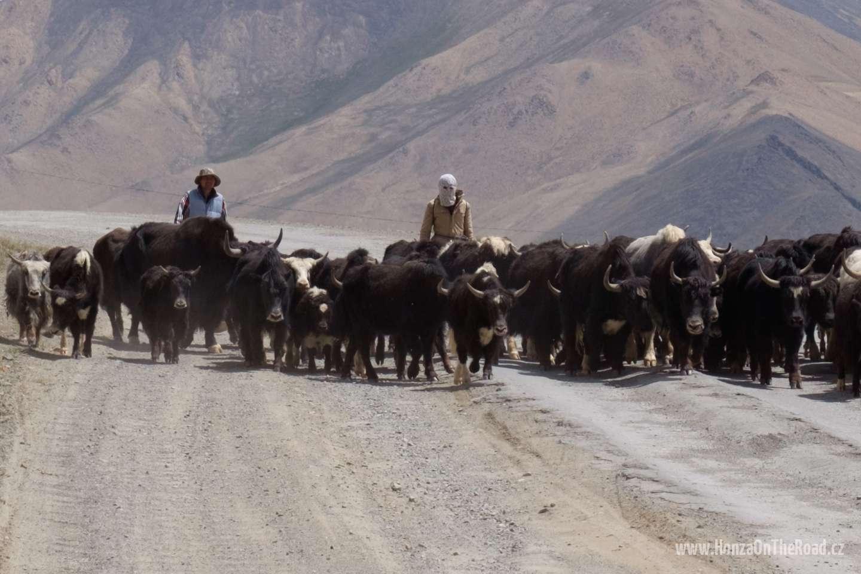 Tádžikistán, Jaci nesmí v Pamíru chybět / Tajikistan, You shouldn't miss yaks in Pamir