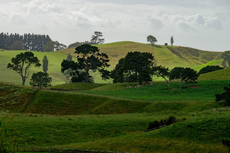 Nový Zéland, Krajina v okolí Hobitína / New Zealand, Landscape around Hobbiton