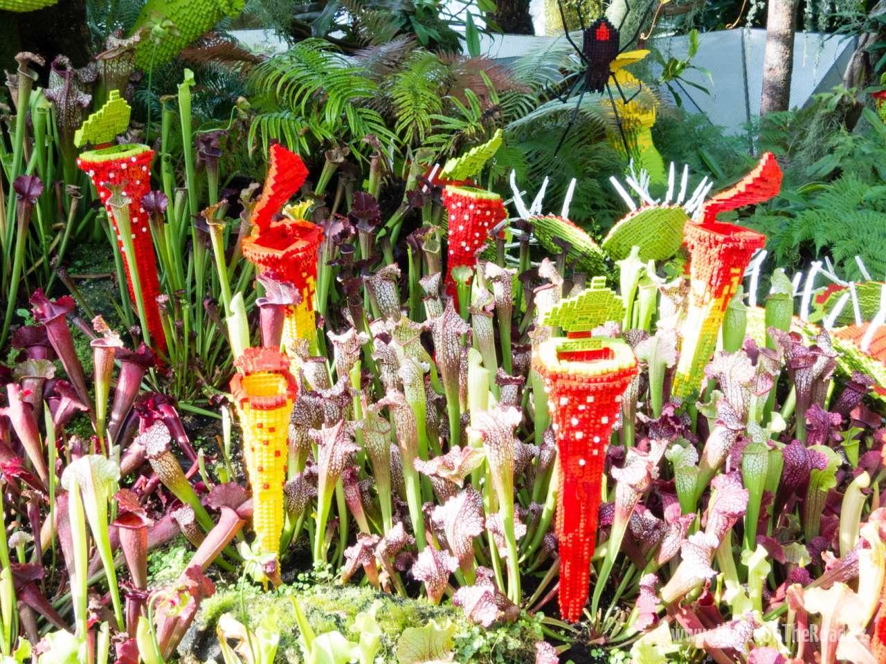 Singapur, Zahrady v Zálivu - Singapore, Gardens by the Bay-3